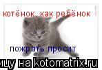 Котоматрица: котёнок, как ребёнок пожрать просит