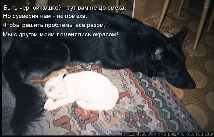 Котоматрица: Быть черной кошкой - тут вам не до смеха, Но суеверия нам - не помеха. Чтобы решить проблемы все разом, Мы с другом моим поменялись окрасом!