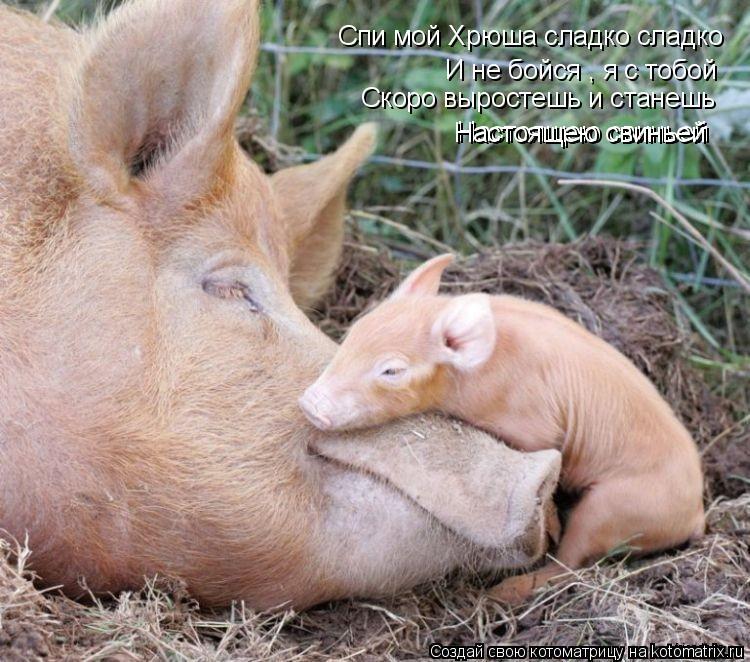 Котоматрица: Спи мой Хрюша сладко сладко И не бойся , я с тобой Скоро выростешь и станешь Настоящею свиньей Настоящею свиньей