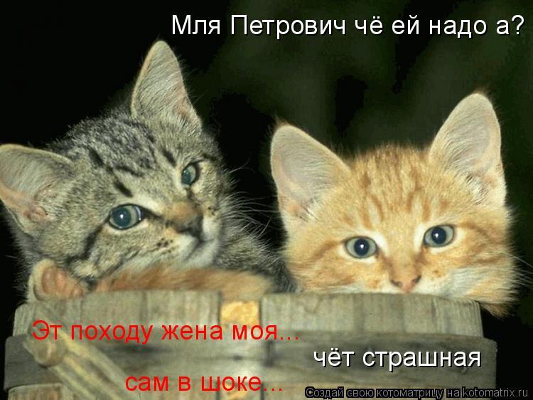 Котоматрица: Мля Петрович чё ей надо а? Эт походу жена моя... чёт страшная сам в шоке...