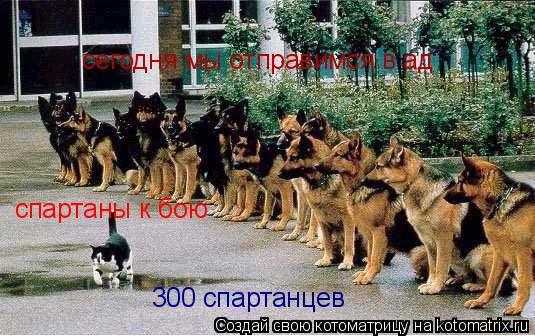 Котоматрица: спартаны к бою сегодня мы отправимся в ад 300 спартанцев