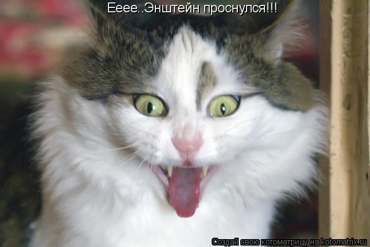 Котоматрица: Ееее..Энштейн проснулся!!!
