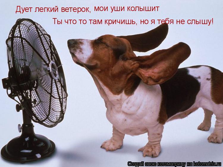 Котоматрица: Дует легкий ветерок,   мои уши колышит Ты что то там кричишь, но я тебя не слышу!