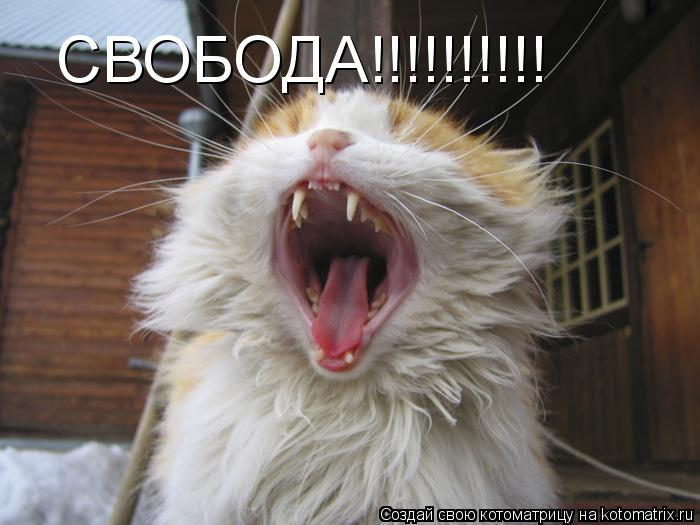 Котоматрица: СВОБОДА!!!!!!!!!!