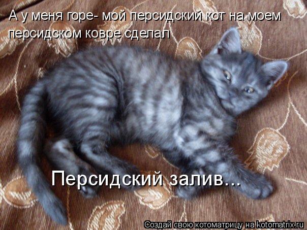 Котоматрица: А у меня горе- мой персидский кот на моем персидском ковре сделал Персидский залив...
