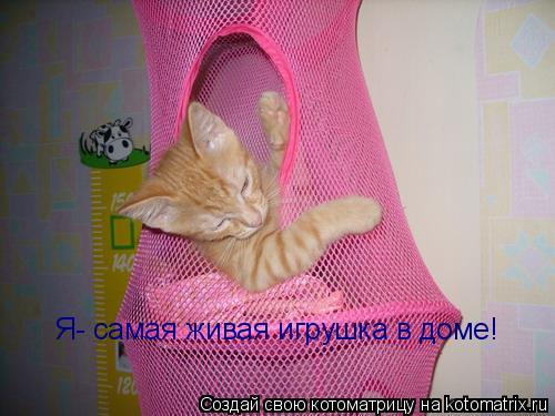 Котоматрица: Я- самая живая игрушка в доме!