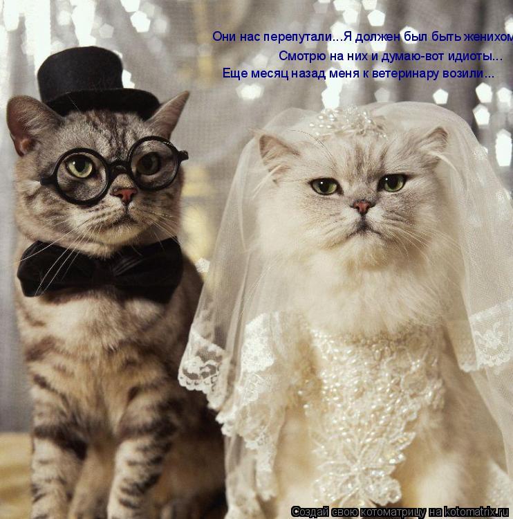 Котоматрица: Они нас перепутали...Я должен был быть женихом.. Смотрю на них и думаю-вот идиоты... Еще месяц назад меня к ветеринару возили...
