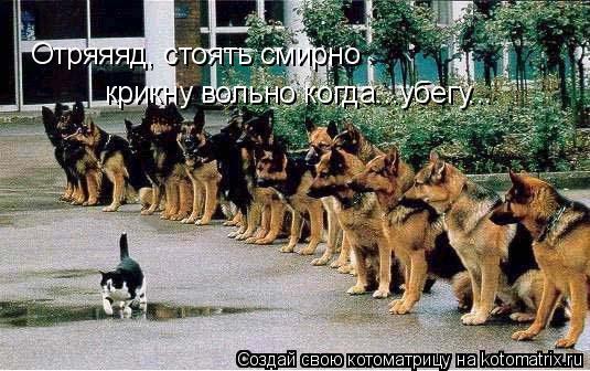 Котоматрица: Отряяяд, стоять смирно крикну вольно когда...убегу...