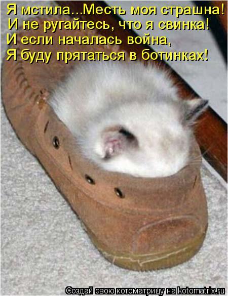 Котоматрица: Я мстила...Месть моя страшна! И не ругайтесь, что я свинка! И если началась война, Я буду прятаться в ботинках!