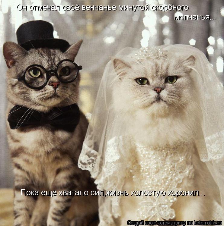 Котоматрица: Он отмечал своё венчанье минутой скорбного  молчанья...  Пока ещё хватало сил,жизнь холостую хоронил...