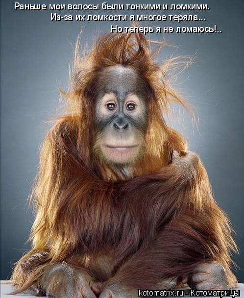 Котоматрица: Раньше мои волосы были тонкими и ломкими. Из-за их ломкости я многое теряла... Но теперь я не ломаюсь!..