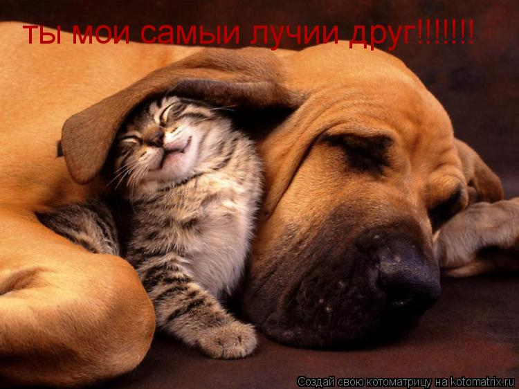 Котоматрица: ты мои самыи лучии друг!!!!!!!