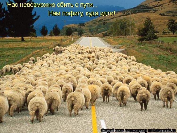 Котоматрица: Нас невозможно сбить с пути... Нам пофигу, куда идти!
