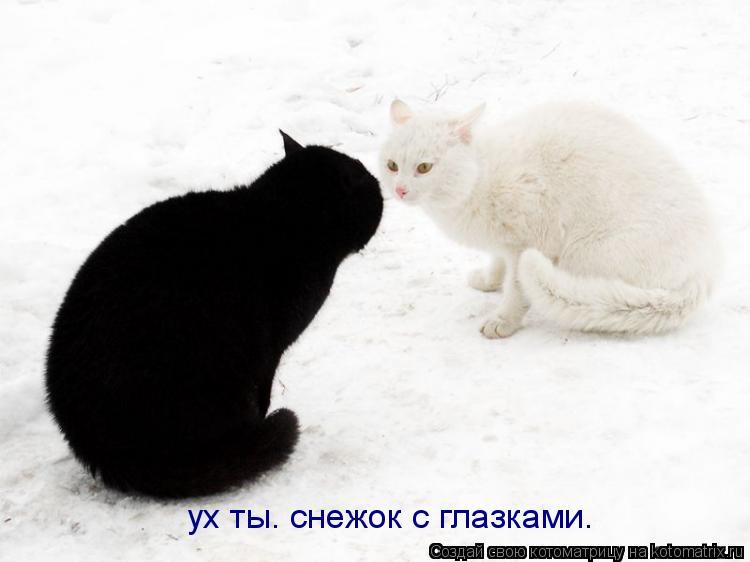 Котоматрица: ух ты. снежок с глазками.