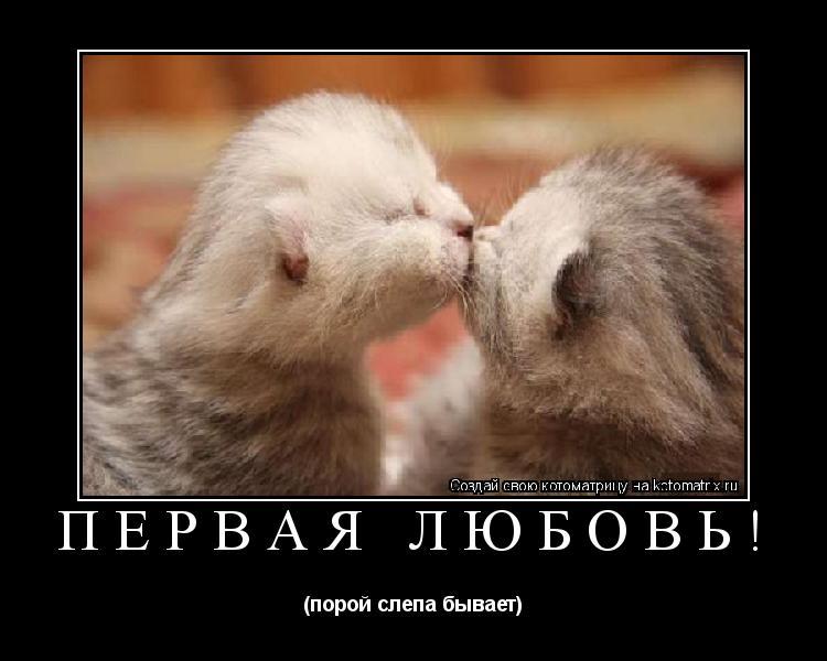 Котоматрица: Первая любовь! (порой слепа бывает)
