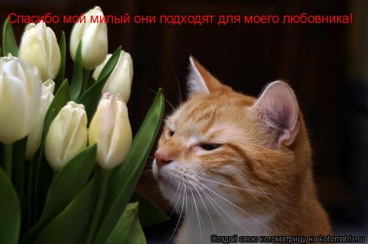 Котоматрица: Спасибо мой милый они подходят для моего любовника!