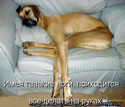 Котоматрица: Имея тааакие ноги, приходится все делать на руках..! Имея тааакие ноги, приходится  все делать на руках..!