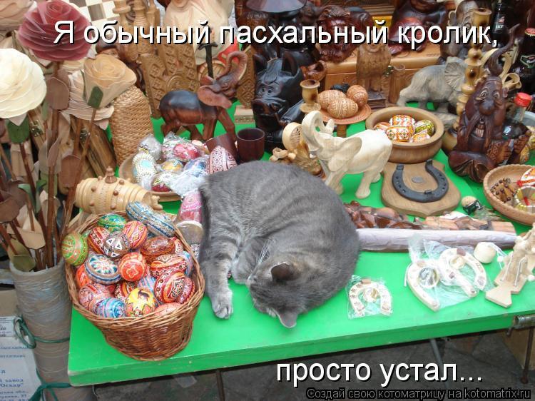 Котоматрица: Я обычный пасхальный кролик, просто устал...