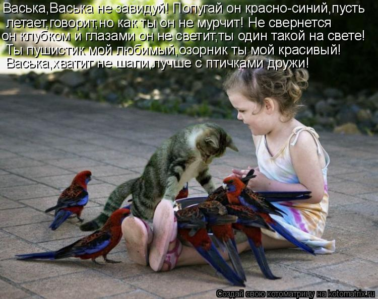Котоматрица: Васька,Васька не завидуй! Попугай он красно-синий,пусть  летает,говорит,но как ты он не мурчит! Не свернется  он клубком и глазами он не свети
