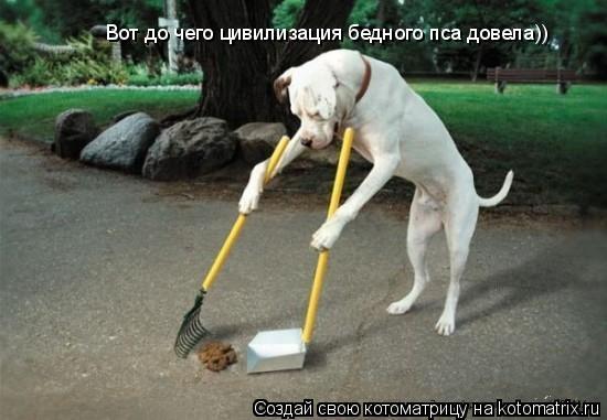 Котоматрица: Вот до чего цивилизация бедного пса довела))