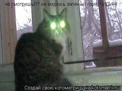 Котоматрица: чё смотришь!!? не видишь зелёный горит! ИДИ!!!
