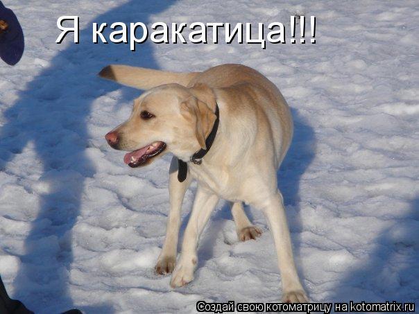 Котоматрица: Я каракатица!!!