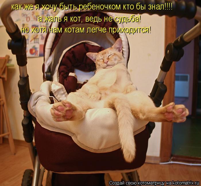 Котоматрица: как же я хочу быть ребеночком кто бы знал!!!! а жаль я кот, ведь не судьба! но хотя нам котам легче приходится!