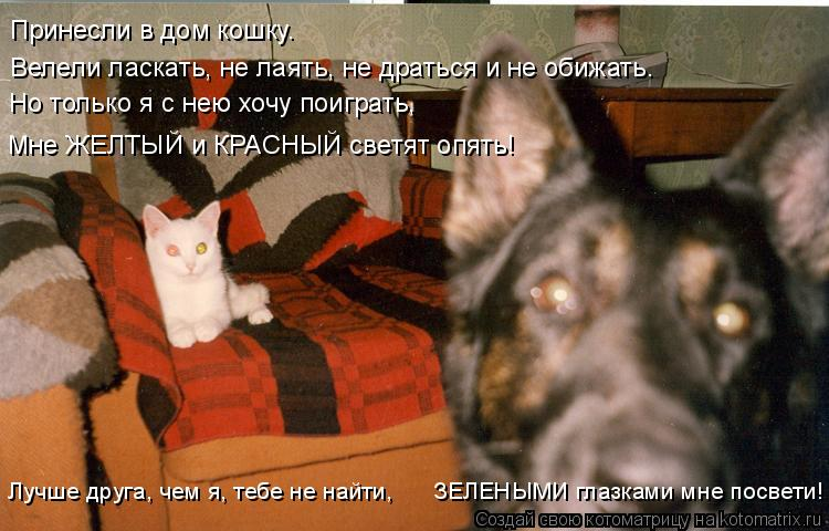 Котоматрица: Принесли в дом кошку. Велели ласкать, не лаять, не драться и не обижать. Но только я с нею хочу поиграть, Мне ЖЕЛТЫЙ и КРАСНЫЙ светят опять! Лу