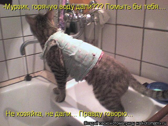 Котоматрица: -Мурзик, горячую воду дали??? Помыть бы тебя.... Не хозяйка, не дали... Правду говорю...