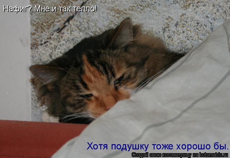 Котоматрица: Нафиг? Мне и так тепло! Хотя подушку тоже хорошо бы...