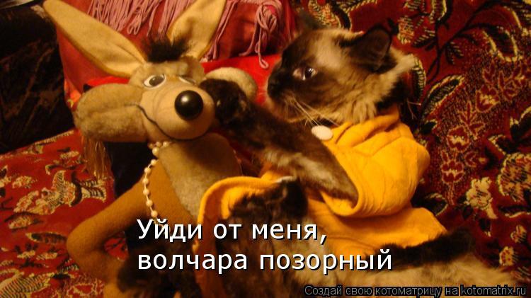 Котоматрица: Уйди от меня,  волчара позорный