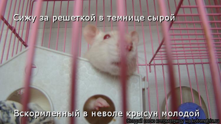 Котоматрица: Сижу за решеткой в темнице сырой Вскормленный в неволе крысун молодой