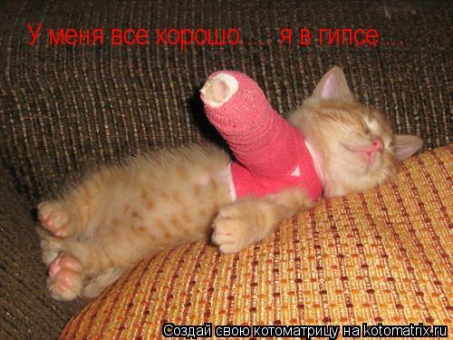 Котоматрица: У меня все хорошо..... я в гипсе....