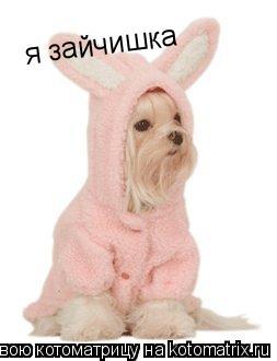Котоматрица: я зайчишка