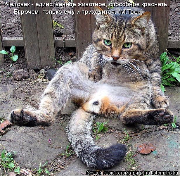 Котоматрица: Человек - единственное животное, способное краснеть.  Впрочем, только ему и приходится. (М.Твен)