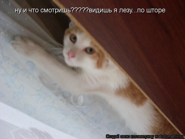 Котоматрица: ну и что смотришь?????видишь я лезу...по шторе