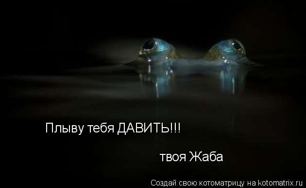 Котоматрица: Плыву тебя ДАВИТЬ!!! твоя Жаба