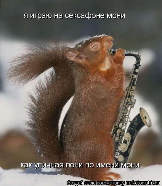 Котоматрица: я играю на сексафоне мони  как уличная пони по имени мони