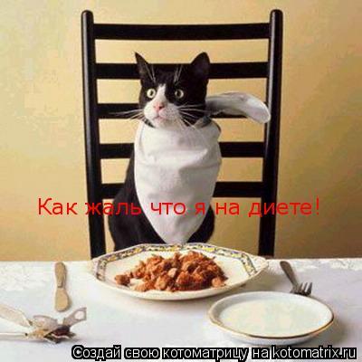 Котоматрица: Как жаль что я на диете!