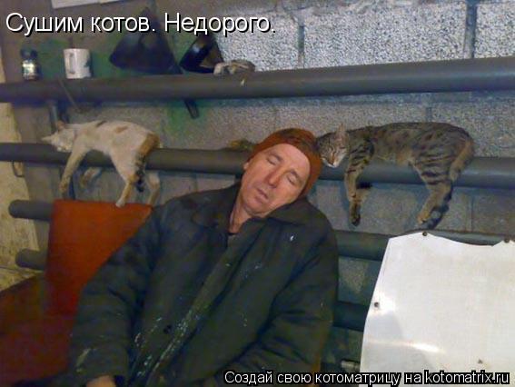 Котоматрица: Сушим котов. Недорого.