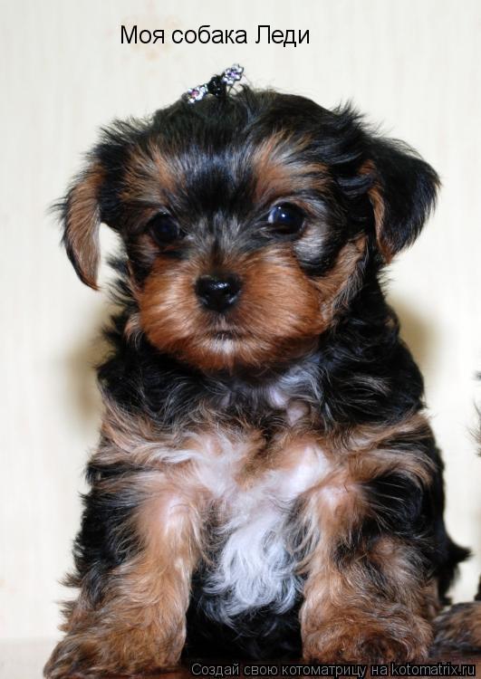Котоматрица: Моя собака Леди