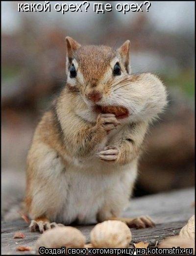 Котоматрица: какой орех? где орех?