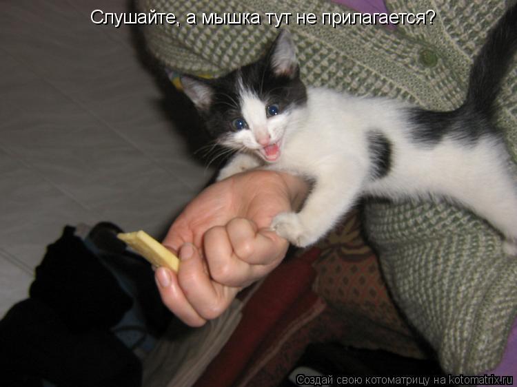 Котоматрица: Слушайте, а мышка тут не прилагается?