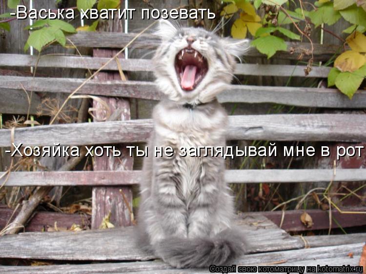 Котоматрица: -Васька хватит позевать -Хозяйка хоть ты не заглядывай мне в рот