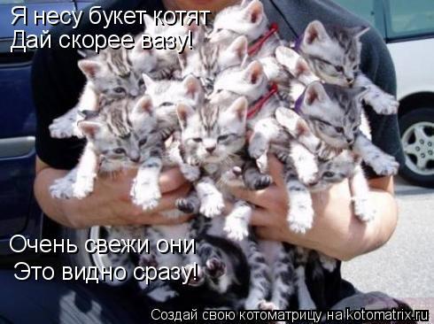 Котоматрица: Я несу букет котят Дай скорее вазу! Очень свежи они Это видно сразу!