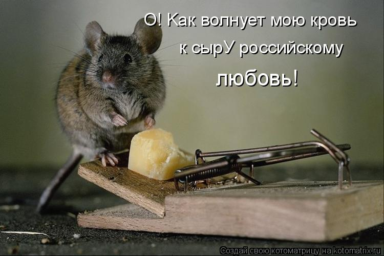 Котоматрица: O! Kак волнует мою кровь к сырУ российскому  любовь!