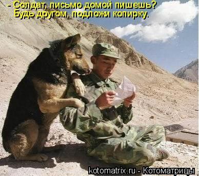 Котоматрица: - Солдат, письмо домой пишешь?  Будь другом, подложи копирку.