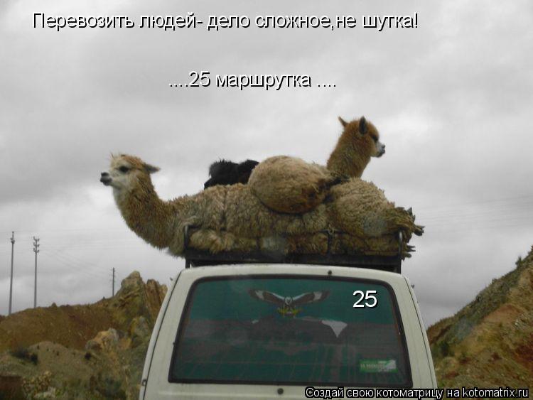 Котоматрица: Перевозить людей- дело сложное,не шутка! 25 ....25 маршрутка ....