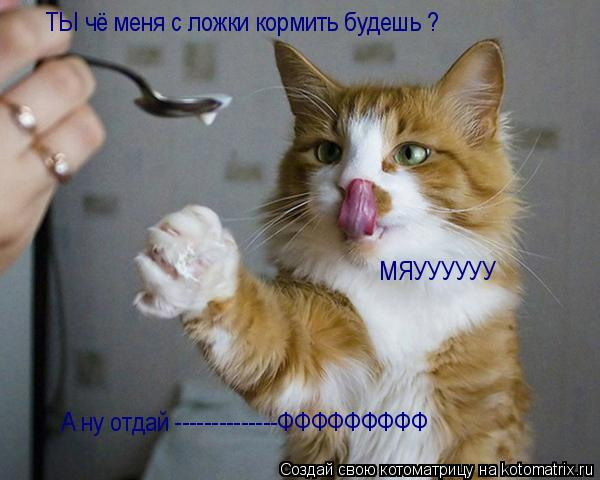 Котоматрица: ТЫ чё меня с ложки кормить будешь ? МЯУУУУУУ А ну отдай --------------ФФФФФФФФФ