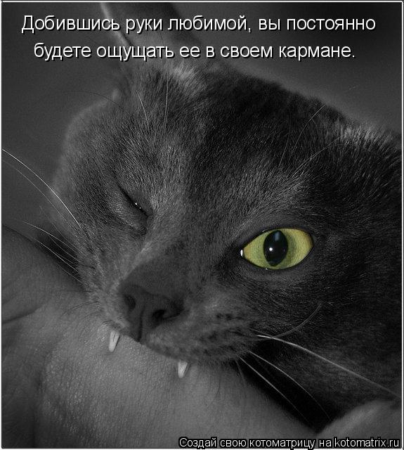 Котоматрица: Добившись руки любимой, вы постоянно будете ощущать ее в своем кармане.